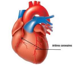 Avant l intervention claude vaislic - Dessin du coeur humain ...